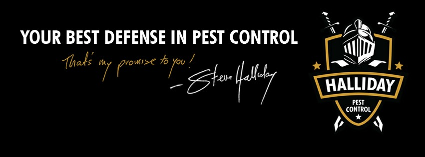 Insect Control Experts